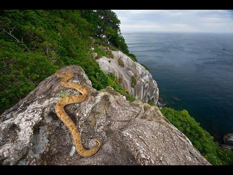 Snake Island in Brazil (2014)