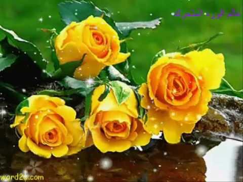 روائع الورود المتحركة مع مناظر جميلة - YouTube