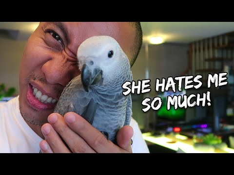 My Pet Bird Is Biting Me - correcting a biting parrot   Vlog #258