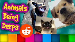 Animals Being Derps  Animal Fail Compilation  Top Reddit Posts