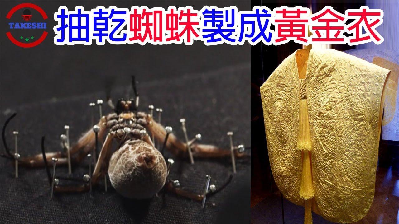 """[生物放大鏡]地球上最貴的布料""""黃金蜘蛛絲""""   能夠""""吐絲""""的蜘蛛羊真的存在   黃金衣的驚人代價"""