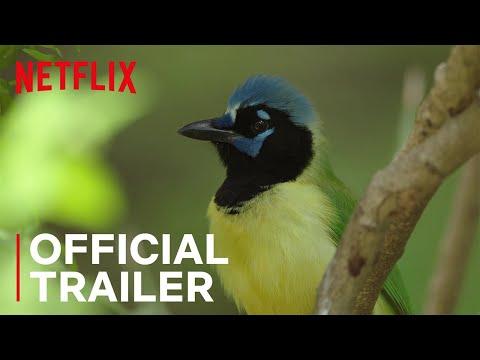 Birders | Main Trailer | Netflix