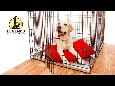 How To Crate Train A Puppy Youtube