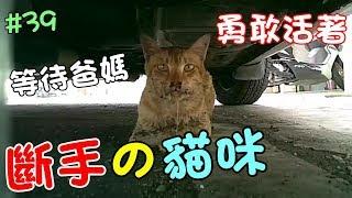 『斷手的貓咪』半年的等待,跟我們回家吧,孩子! Cat Story#39