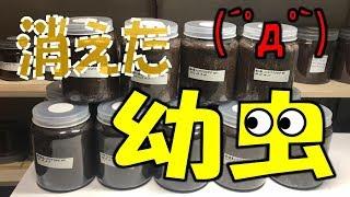 クワガタ&カブトムシ 消えた幼虫とエサ交換】(くろねこチャンネル) ...