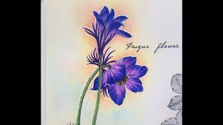 Pasque Flower Coloring - The Flower Year Coloring Book