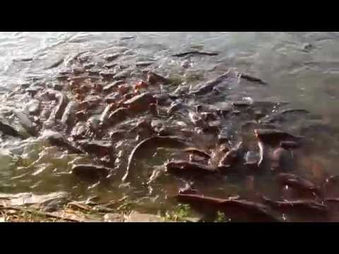 Fishes in JP Park Bangalore
