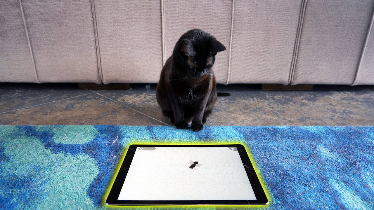 i bought my cat an iPad so she could play games