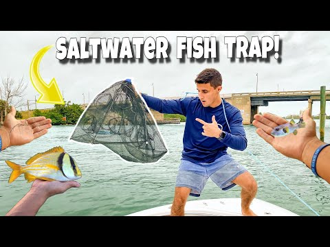 FISH TRAP Catches TROPICAL Fish On BOAT!!