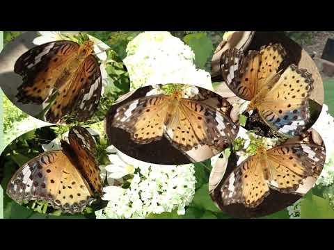 蝶が来た庭前半nokoの花図鑑