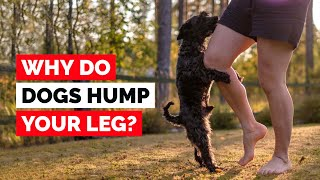This is Why Dogs Hump Your Leg