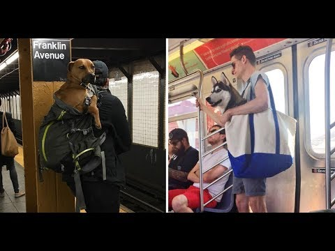 NYC Subway Bans Dogs Unless They Fit Into A Bag, And New Yorkers' Solution Is Hilariously Clever