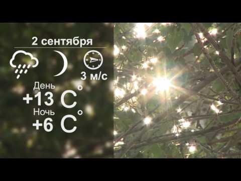 Прогноз погоды на 2 сентября