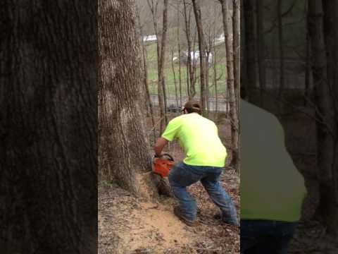 how to bore cut a tree
