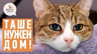 """Особенная кошка Таша: борьба, судьба и поиски хозяина (частный приют """"Муркоша"""")"""
