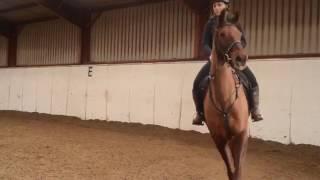 Teknik menunggang kuda