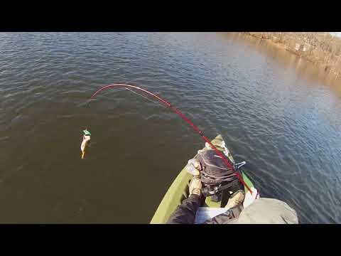 PERCH   Pompton Lake   3/5/18
