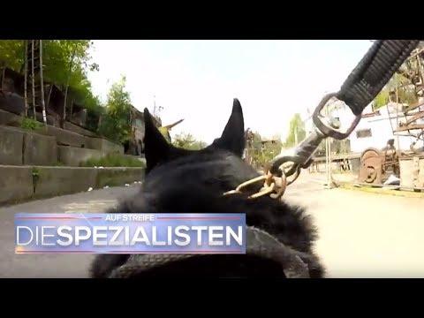 Polizeihund im Einsatz: Spürhund erschnüffelt Vermissten   Auf Streife - Die Spezialisten   SAT.1 TV
