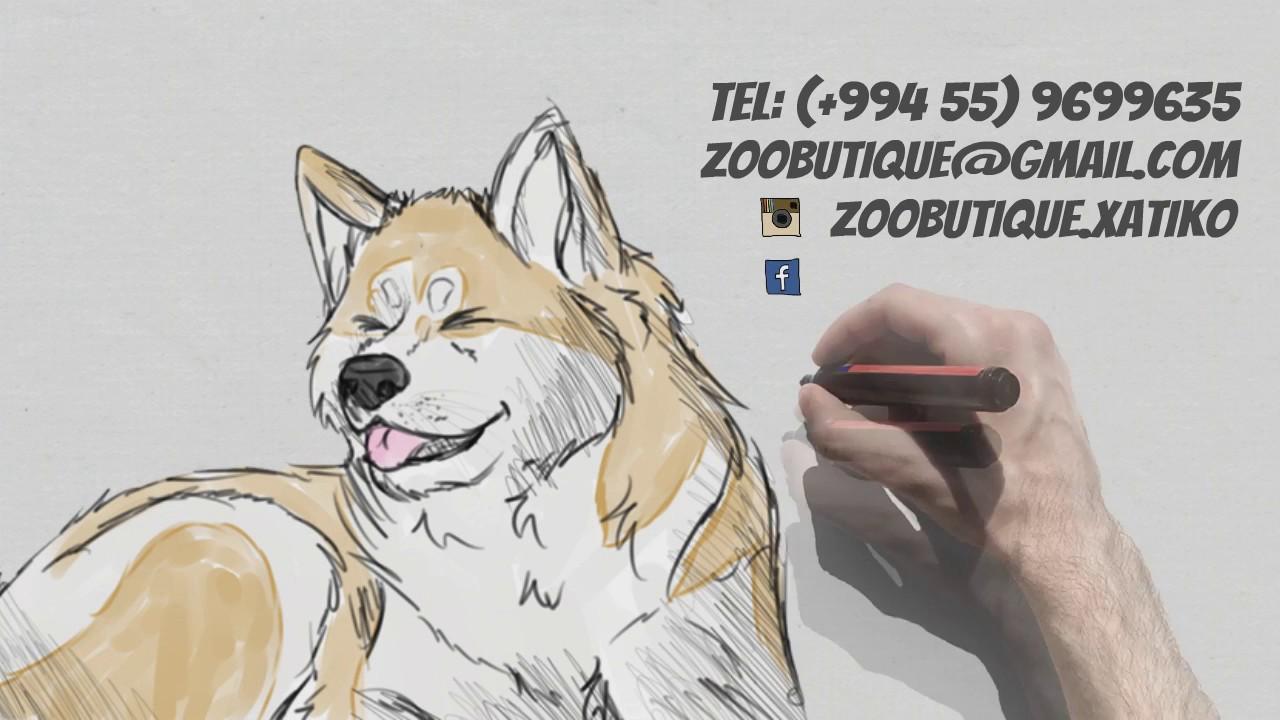 Отель повышенной комфортности - исключительно для собак - YouTube