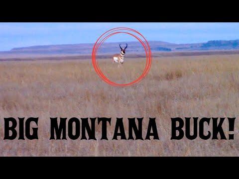 Montana Public Land Antelope Hunt!