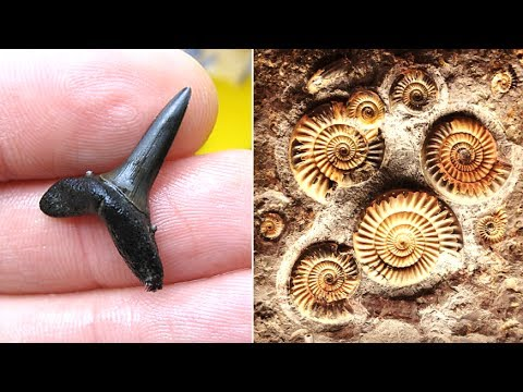 5 Best Beaches For Fossil Hunting UK