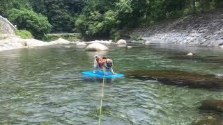犬とお出かけ #パグとお出かけ #犬連れ登山 #パグ連れ登山 #パグとバイ...