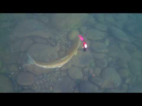 Water Wolf - Fishing For Steelhead Underwater Footage