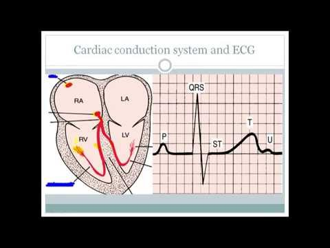 The Essential basics of ECG that is must for every medical professionals.