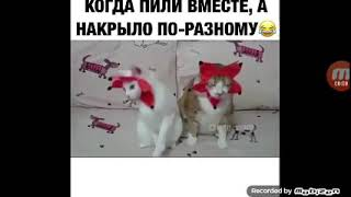 Смешное видео с котиками в контакте
