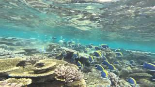Рыбки Дори на Мальдивах