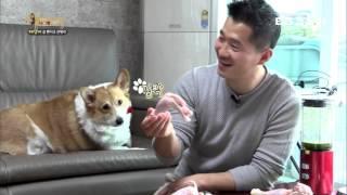 비만견 강아지 다이어트 방법 [EBS 세상에 나쁜 개는 없다]