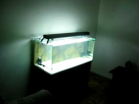80 gallon 300 liters fish tank cycling aqu rio de 300 litros ciclando youtube. Black Bedroom Furniture Sets. Home Design Ideas