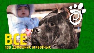 Собаки И Ответственность. Все О Домашних Животных