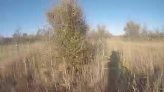 Открытие сезона охоты на фазана в Анапе