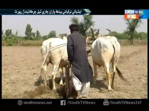 Asian Development Bank  Report On Weather Report - Sindh TV News
