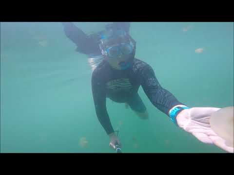 Stingless Jellyfish Lake In Kakaban, Indonesia - Sep 2017