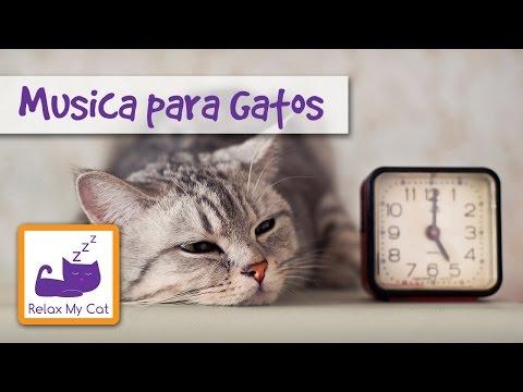 Cure Ansiedad Por Separación Gato Con Música Relajante