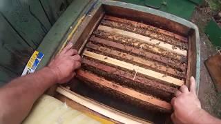 Осмотр пчелопакетов №3 серия первая. Освоение вощины со скоростью суши.
