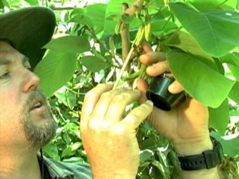 Gardening tips: how to hand pollinate tomatoes for larger ...