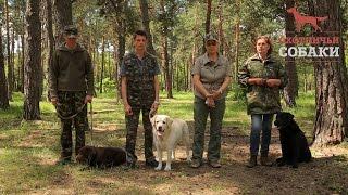 Охотничьи собаки. 23 серия. Лабрадор-ретривер