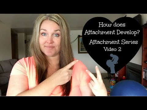 How is Attachment Developed?