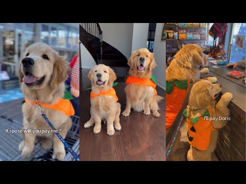 Sterling And Colin Shop For Pumpkins Then Get Weighed