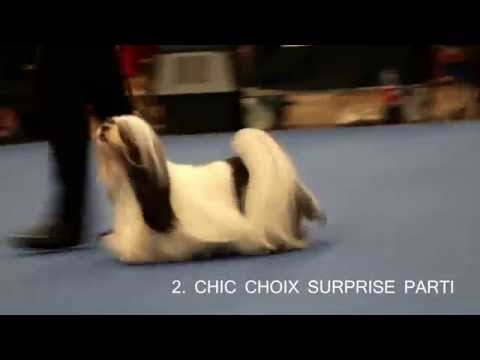World Dog Show 2014 Lhasa Apso