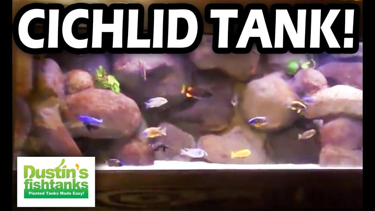 125 gallon cichlid tank best cichlid tank i 39 ve seen with for Dustins fish tanks