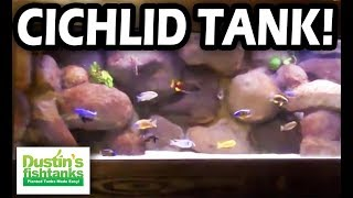 125 gallon cichlid tank best cichlid tank i ve seen with my own two eyes best cichlid tank