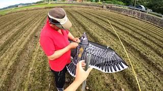 [귀농귀촌] 시골 초보의 콩밭 관리하기 [독수리 연설치…