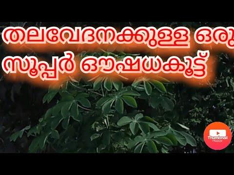 headache, Malayalam Health Tips, how to remove head pain, head pain remove, how to remove head pain