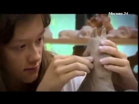 О скульптурной мастерской А.М.Павлюка