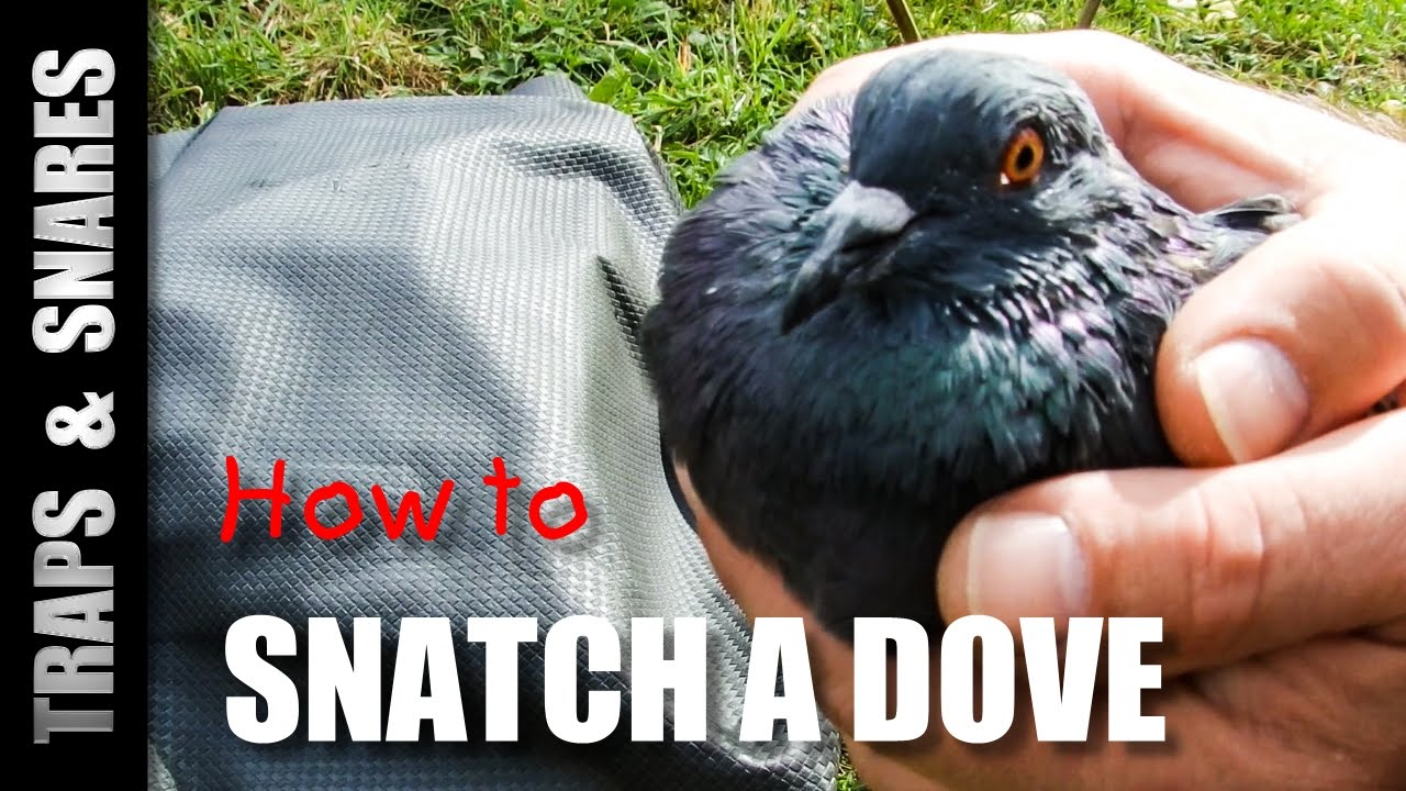 how to make a dove trap