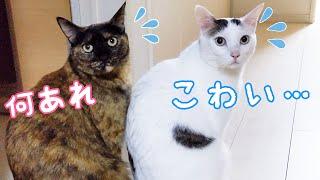 新しいモニターにビビりまくる猫たち